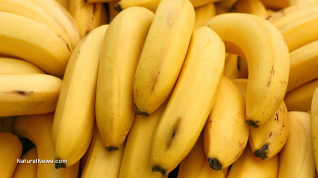Image: Going bananas over losing weight? Why not try eating more bananas