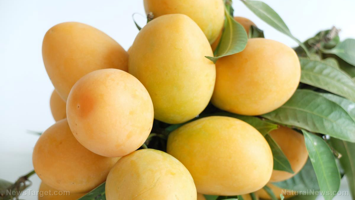 Image: 5 Health benefits of mangoes (as well as 3 healthy recipes)
