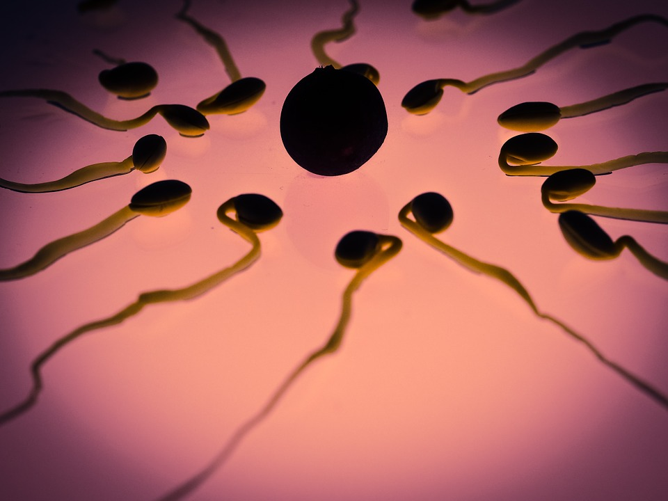 Image: Scientist says sperm counts are dropping so low that human reproduction may soon be a thing of the past