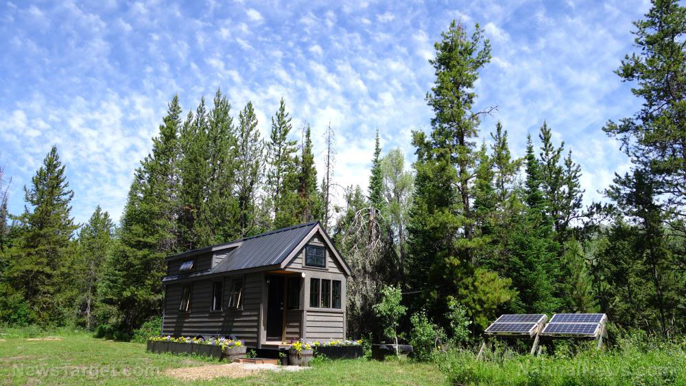 Image: Sustainable and independent: Swedish family lives off-grid in a 160-square foot cabin in the woods